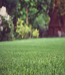 artificial grass by quickgrass