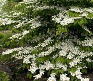 april garden landscaping tips 3