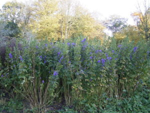 october garden plant pictures